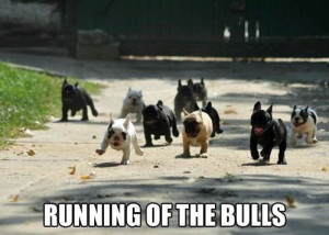 Funny-dogs-Running-of-the-bulls.jpg