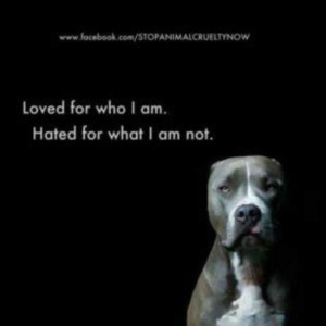 """Photo of the Day: Adorably Cute, Sad Pit Bull: """"When will they blame ..."""