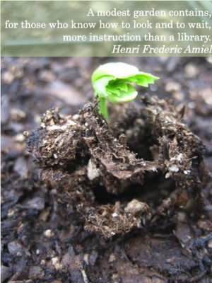 Planting Seeds Quotes Growing a plant from seed to