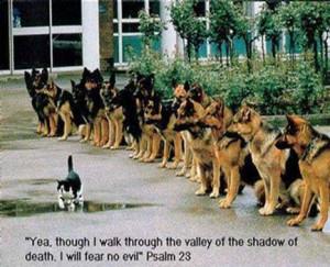 fearless kitty? - positive-thinking Photo