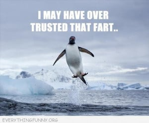 funny penguin shooting out of water misjudged that fart