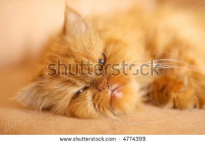 ... funny cat photo image hd jazz hands funny cat photo crying funny cat