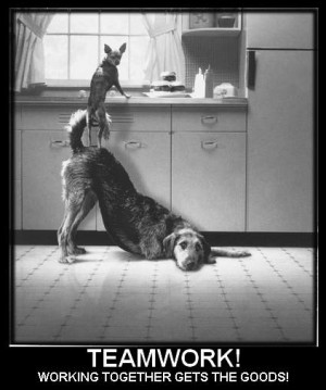 Teamwork dogs - Image