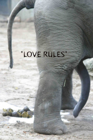 "QR quote ""Love rules … shit happens!"""