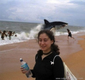 best photobomb ever whale jumping out of water at beach