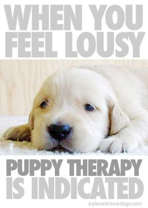 College Offers 'Puppy Room' to Stressed-Out Students: Does Playing ...