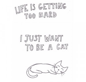 Cat Quotes Tumblr