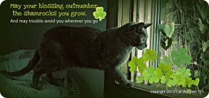 ST-PATRICKS DAY-SHAMROCKS-QUOTE-cat-cat wisdom 101