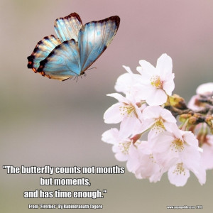 Beautiful Butterfly Quotes And Sayings About Happiness: Flower Quotes ...