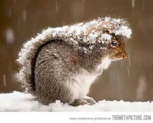 Funny photos funny squirrel tail snow storm