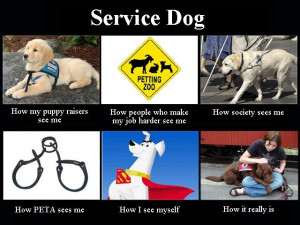 service dogs - I like this take on that whole