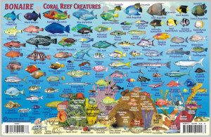 Caribbean Reef Fish
