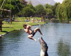 funny crocodiles
