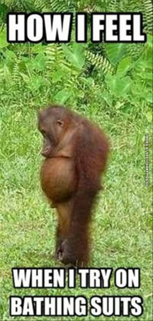 funny picture how i feel when i try on bathing suits