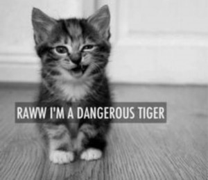 cute, kitten, quotes