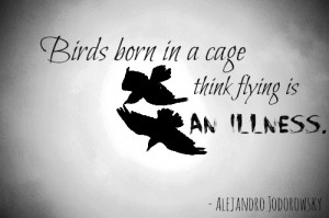 Birds Born In A Cage Think Flying Is An Illness - Birds Quote