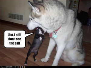 funny dogs pics cute.