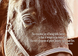 beautiful horse quotes
