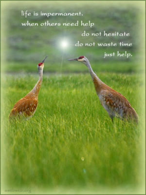 Help others quotes - Life is impermanent, when others need help do not ...