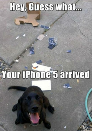 Thanks Dog…