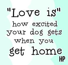 ... how excited your dog gets when you get home.. #love #petlove #quotes