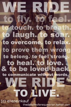 Horse And Rider Quotes Tumblr (33)