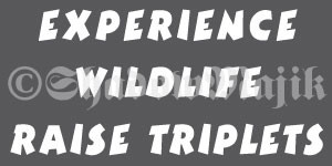 Details about Experience Wildlife Raise Triplets - Funny Vinyl Decal