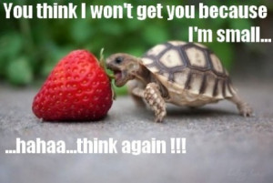 Funny baby turtle | funny-pics.co