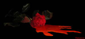 Blood Roses::..