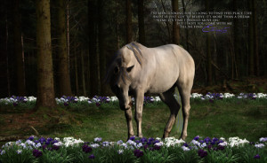 ... line graphics by billie beautiful horse poems beautiful horse poems
