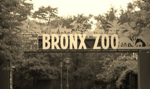 The Bronx Zoo New York