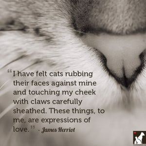 cat love quotes cat love quotes cat love quotes cat love quotes