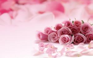 Pink roses picture HD Desktop Wallpaper 1680x1050 widescreen hd ...