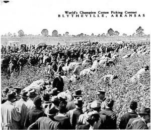Cotton Picking Contest