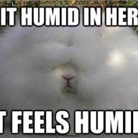 Global Warming Humidity Funny Mini Poster Print