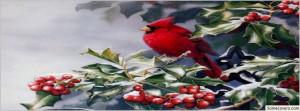Red Cardinal Bird Sayings
