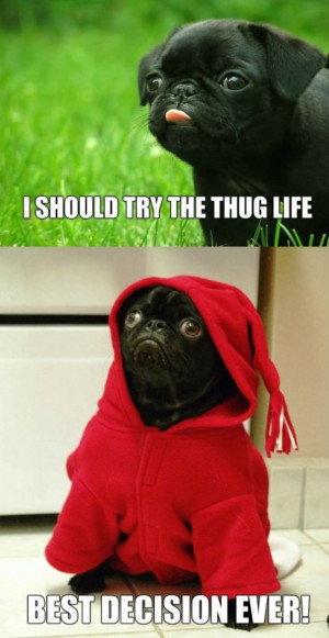 Funny-Pictures-Thug-life.jpg