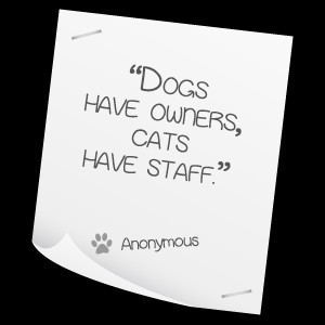 pet care quotes