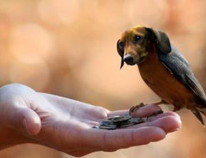 Dogs Birds = Dirds