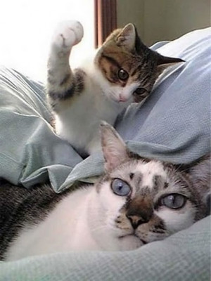 cat slap - Image