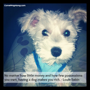 ... few possessions you own, having a dog makes you rich