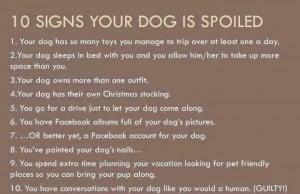 10 signs your dog is spoiled