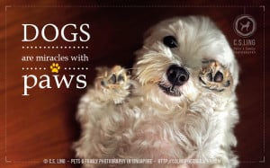 ND33522 Cute Quotes : Dogs are miracles with paws