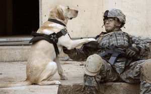 Unsung Heroes – Remembering Military Service Dogs on Memorial Day