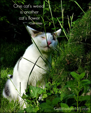 Tag Archives: cat-quotes-garden-weed-flower