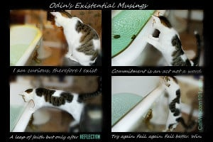 ... of cats tagged cat bath quote curious reflection existential cat humor