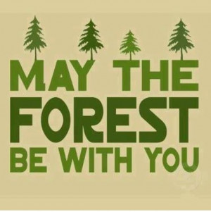 Inspiration funny quote forest