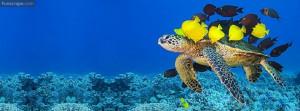 Sea Turtles Used: 71 times