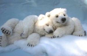 Polar-bear-calfs.jpg