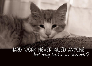 Cat Napping Quote Photograph